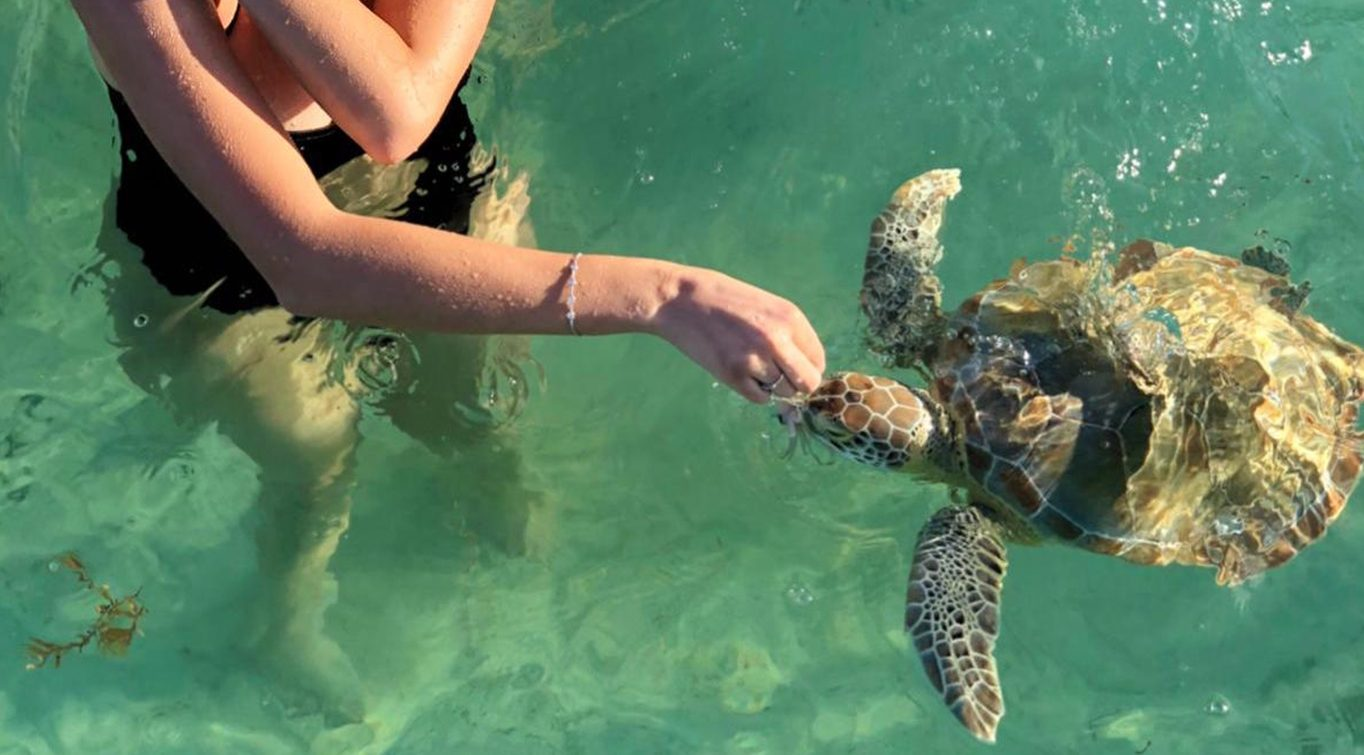 Meet-a-Sea-Turtle